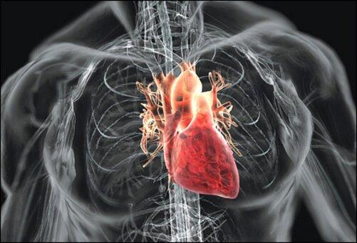 На фото: заболевания сердца